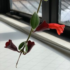 変な植物??
